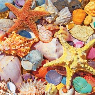 CharlesSimpson.com Beach Shells - 550 Piece Jigsaw Puzzle